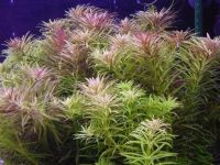 Роскошный ковер аквариума