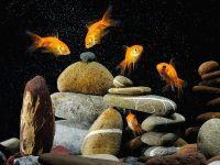 Влияют ли камни на уровень pH в аквариуме?