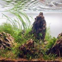 Правила оформления — камни в аквариуме