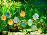 Плотность населения аквариума