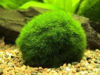 Кислородная подушка аквариума