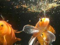 Разные корма для аквариумных рыб