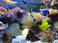 Разнообразие подводных миров