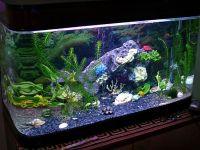 Как разместить в подводном царстве ракушки?