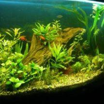 Об аквариумном грунте