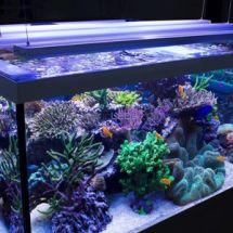 О важных аспектах аквариумного освещения