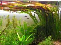 Зеленые аквариумные обои