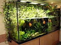 Основные правила выбора и обустройства аквариума для новичков