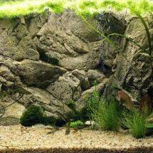 Декор аквариума — оформляем фон