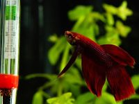 Способы понижения температуры воды в аквариуме