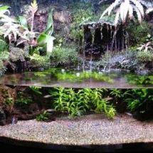 Тропический остров в квартире: создание палюдариума