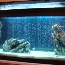 Песчаный грунт для аквариума