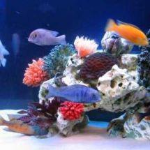 Псевдоморе — завораживающий подводный мир у вас дома