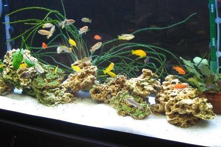 аквариум с грунтом в виде песка