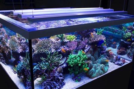 аквариумное освещение