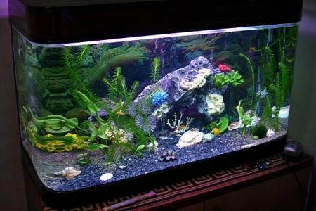 аквариум c ракушками