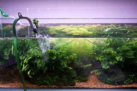 меняем воду в большом аквариуме