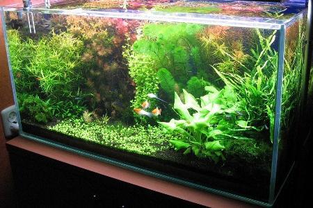 голландский аквариум с рыбками