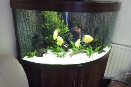 аквариум экономящий пространсвто