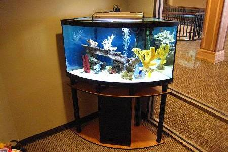 угловой аквариум экономит пространсвто в квартире