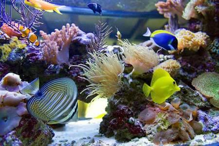 аквариум с морскими рыбками