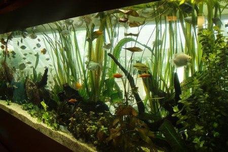 правильный уход за пресноводным аквариумом