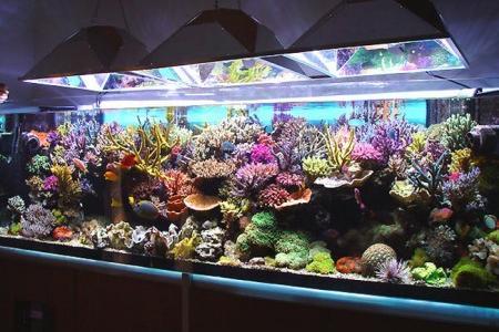 правильное содержание морского аквариума