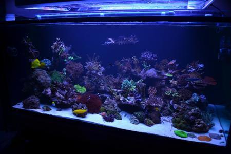 заботливое содержание аквариума