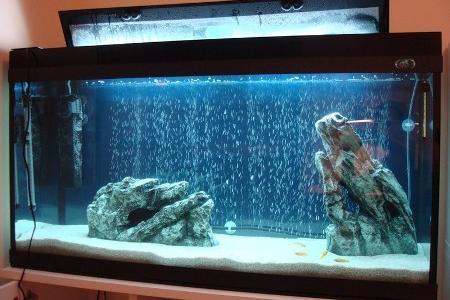 аквариум с песком в виде грунта