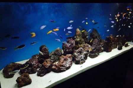 рыбки в аквариуме с песчаным грунтом