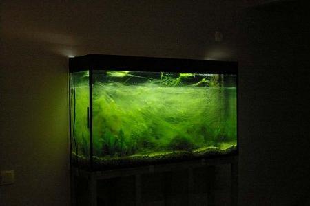 запущенный аквариум