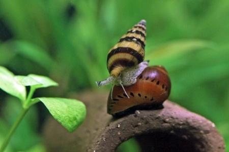 хелена в аквариуме