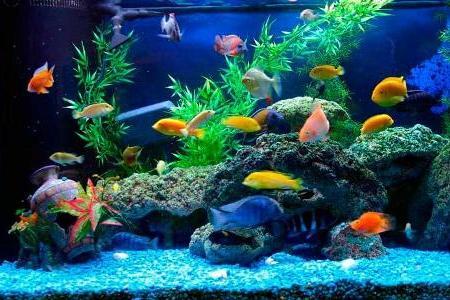 ухоженный аквариум с здоровыми рыбками