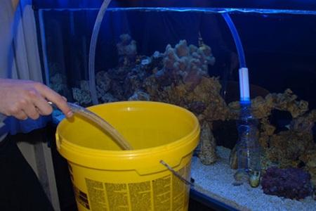 чистка дна аквариума с помощью сифона