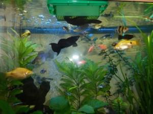 аквариум с плавающей кормушкой