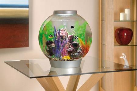 рыбки и растения в круглом аквариуме