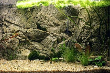 аквариум с объемным задним фоном