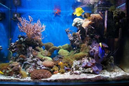 синий фон в морском аквариуме
