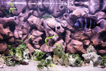 самодельный фон в аквариуме с рыбками
