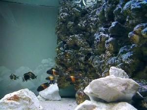 фон для аквариума из камней и монтажной пены