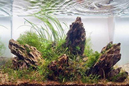 аквариум украшенный камнями дракон