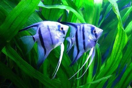 рыбки на фоне растений в аквариуме