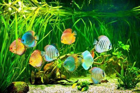 аквариумные рыбки на фоне растений