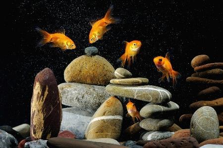 аквариум с камнями