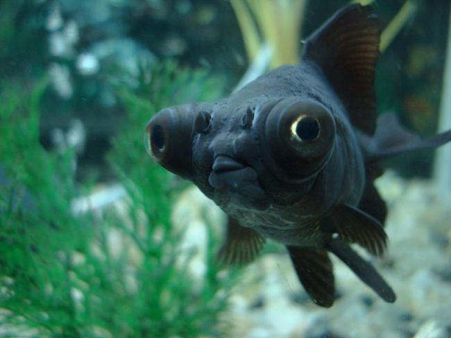 черная рыбка телескоп