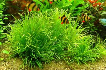 рыбки на фоне бликсы японской в аквариуме