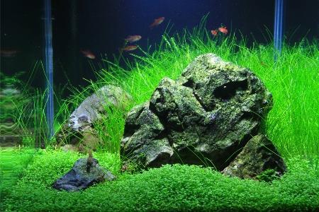 Micranthemum Monte Carlo на переднем плане в аквариуме