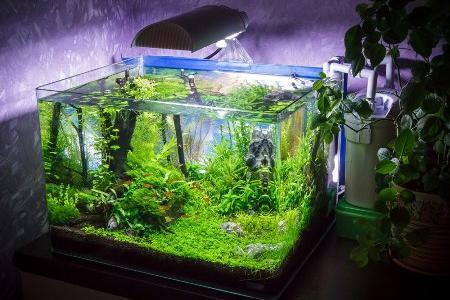 аквариум с Хемиантусом куба