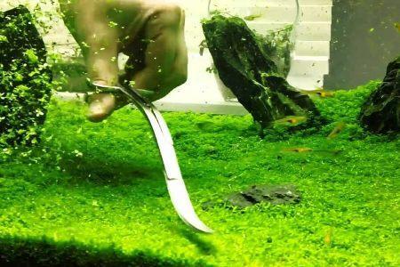 стрижка Хемиантуса куба в аквариуме