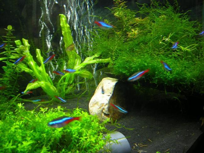 аквариум с голубыми неонами